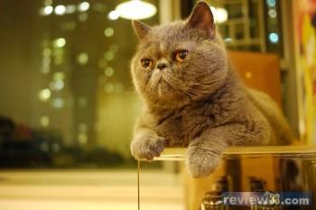 壁纸 动物 猫 猫咪 小猫 桌面 350_233